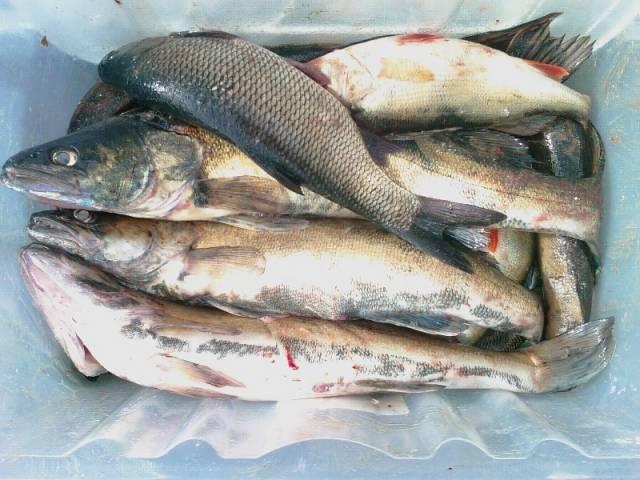 rybalka30 рыбалка на базе Свирская