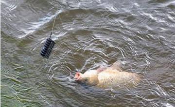 1307122227 50 рыбалка на базе Свирская