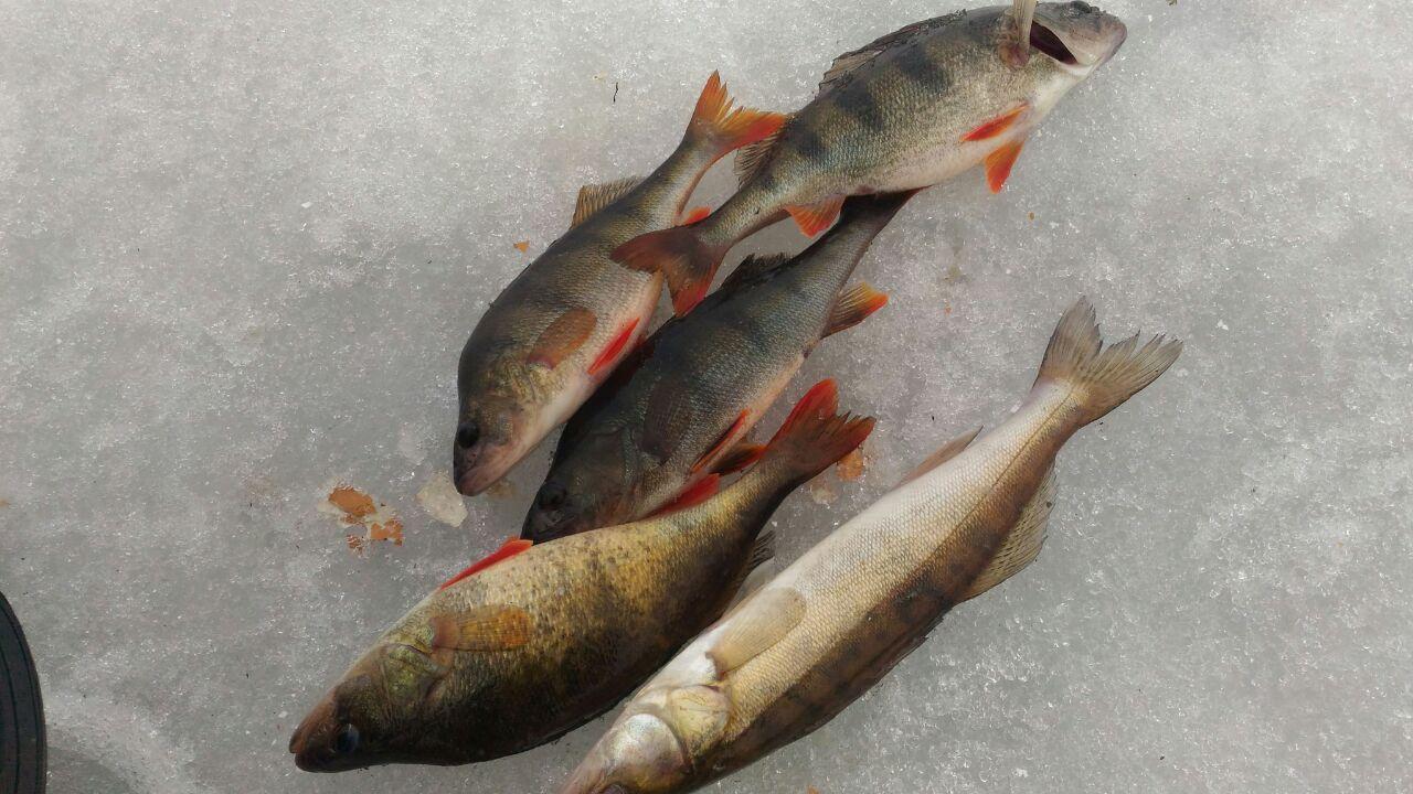 KC1b75UbQyk рыбалка на базе Свирская